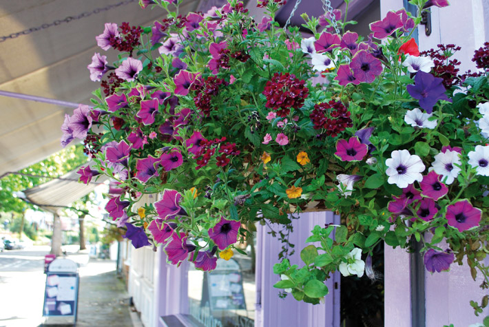 Award winning floral displays around the village